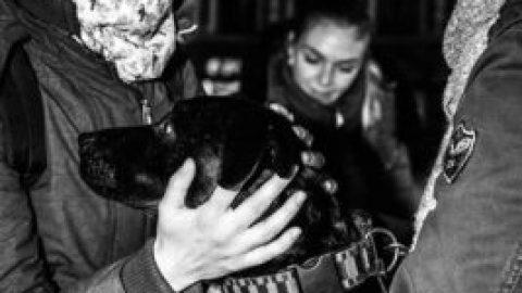 Maraude des pros des animaux 2019